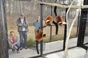 Software developers Freda Cameron and the late Richard Roach volunteered to convert the Duke Lemur Center's aging inaccessible source files into a modern format.
