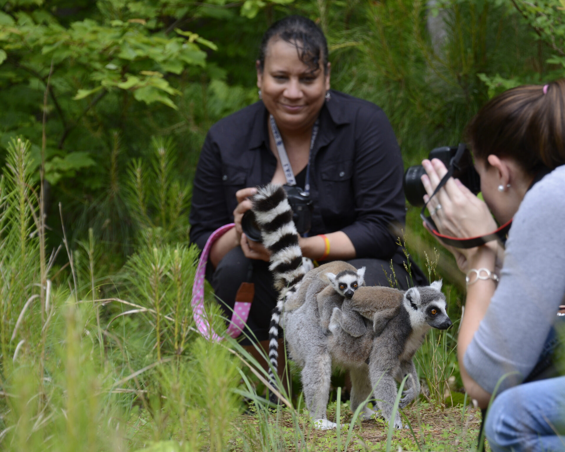 photography tour walking with lemurs ringtails