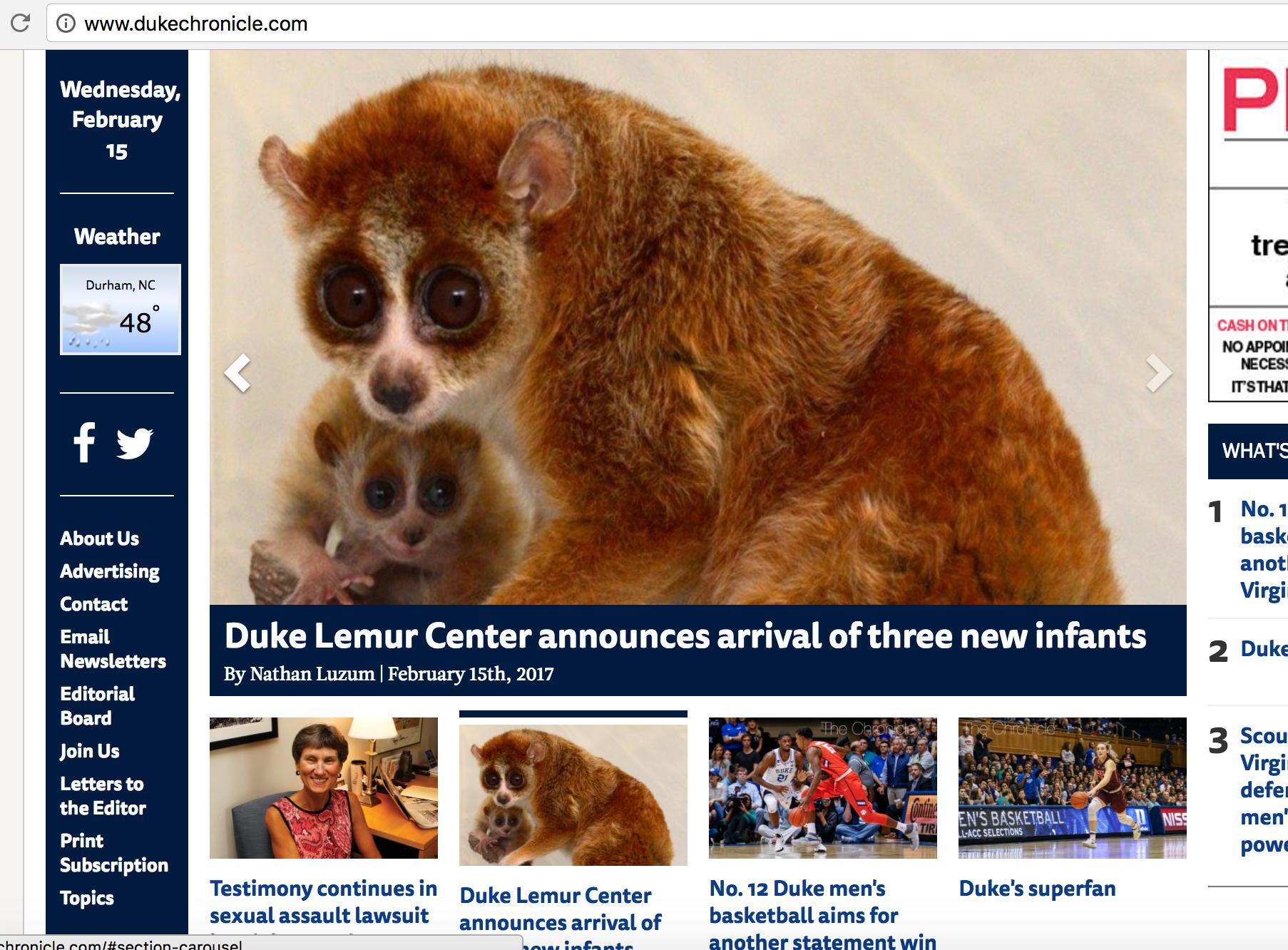 baby pygmy slow loris infant duke lemur center chronicle