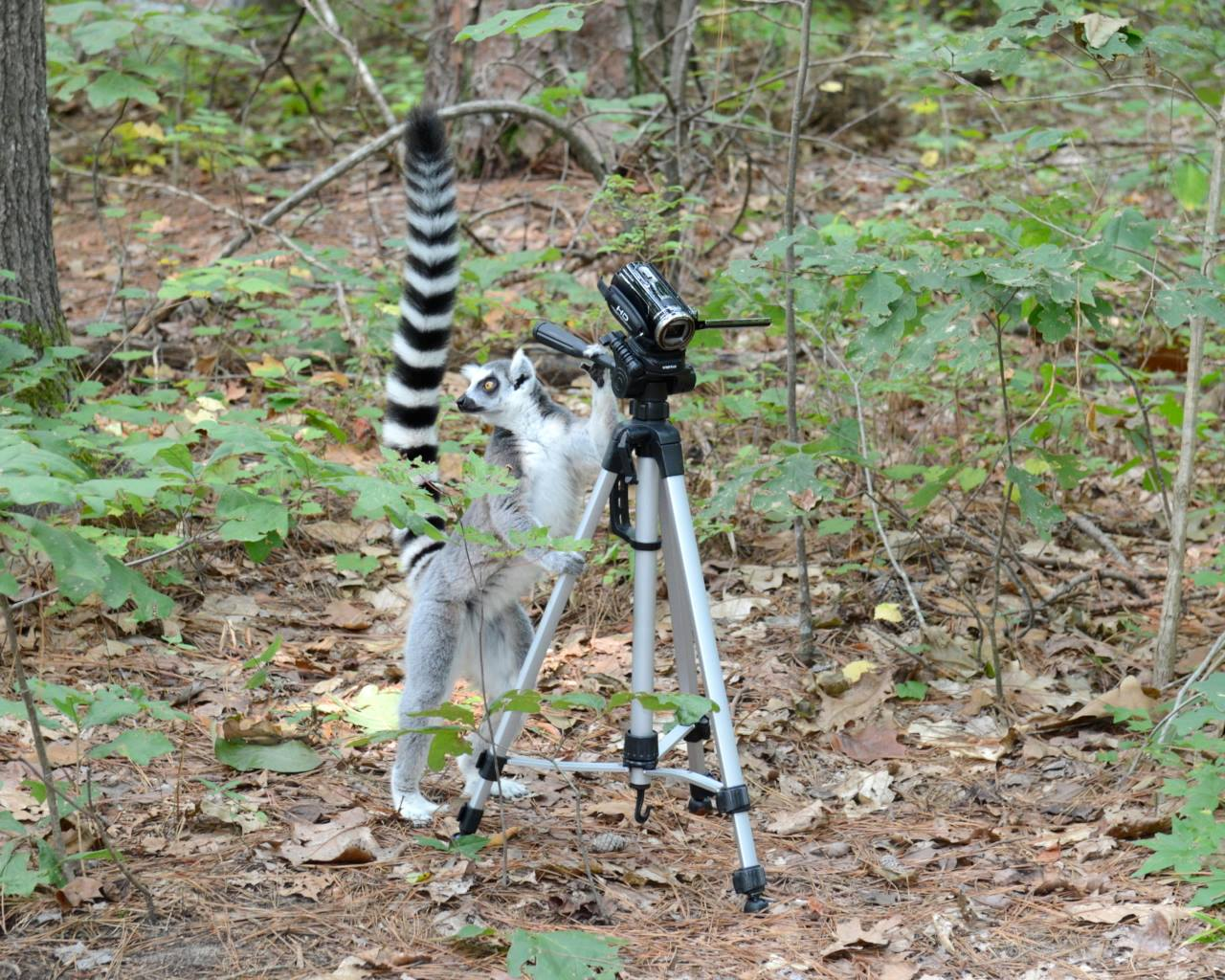 photography tour walking with lemurs