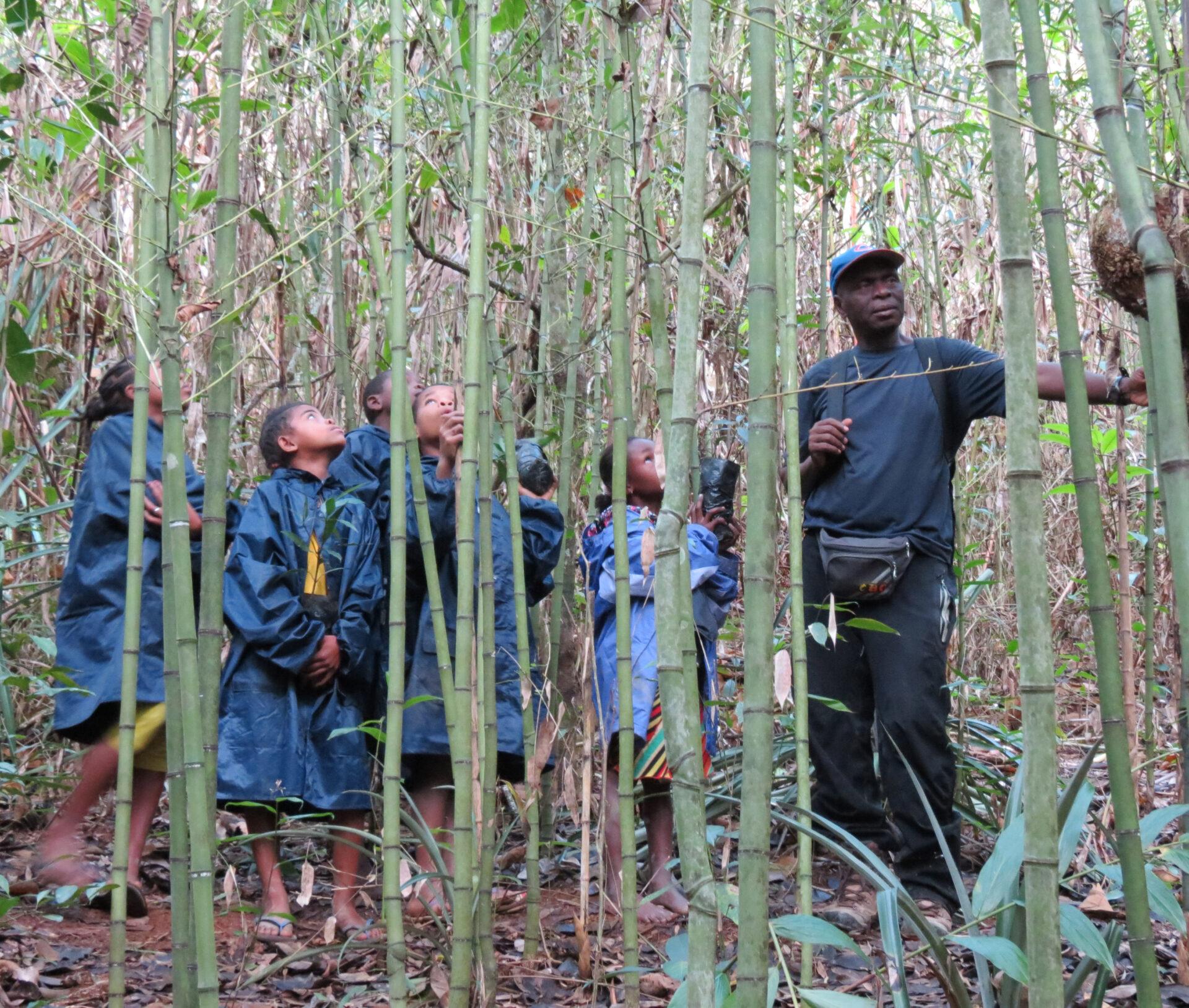 madagascar SAVA conservation
