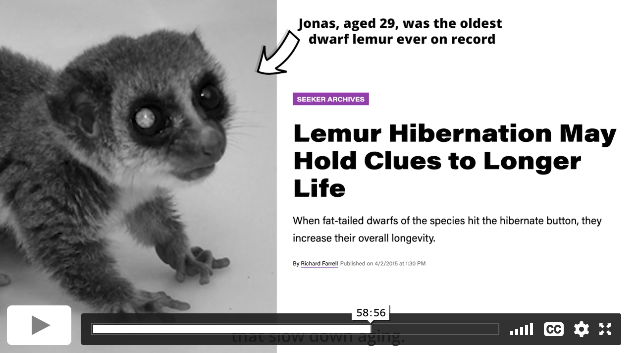 """Screenshot from a video showing a 29-year-old dwarf lemur and the headline """"Lemur Hibernation Holds Clues to Longer Life"""""""
