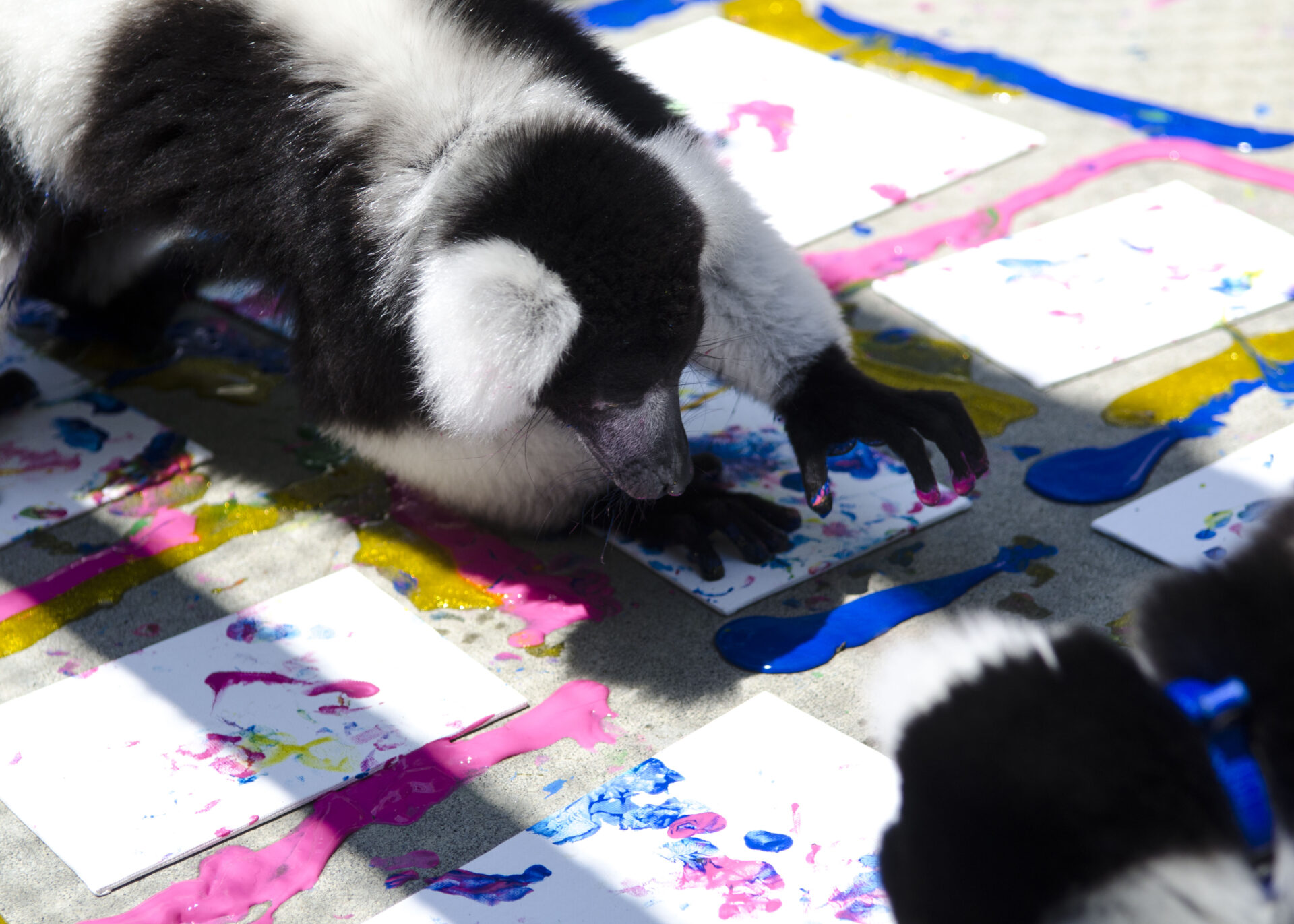 Painting with Lemurs–July 2016(01)