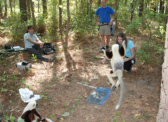 research 3 – sifaka locomotion trials
