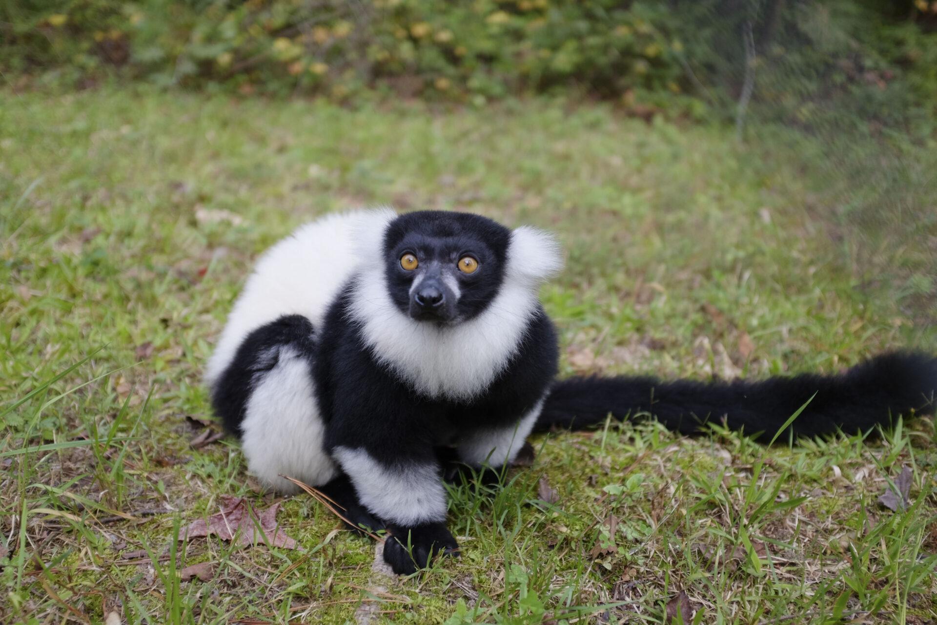 1b Lemurpalooza 2016 (49)