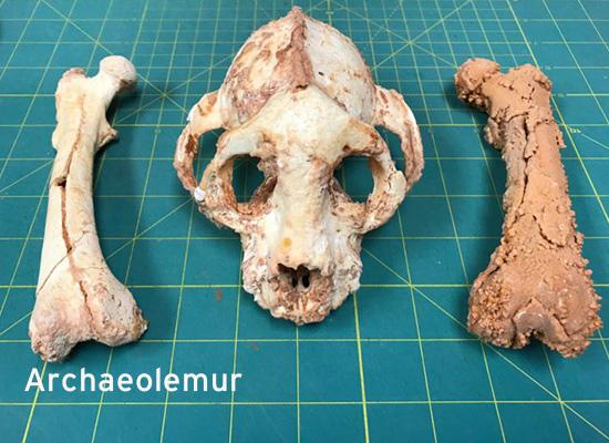 archaeolemur for slider 2
