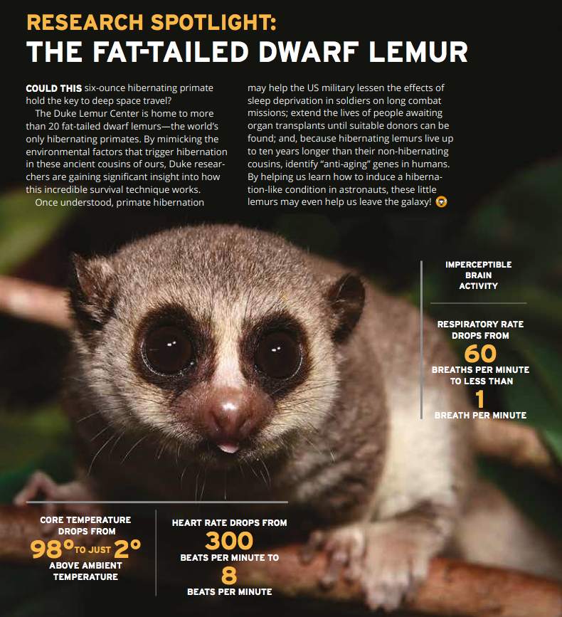 Image of fat-tailed dwarf lemur surrounded by statistics about hibernation