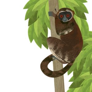 Illustration of the eastern woolly lemur in a tree