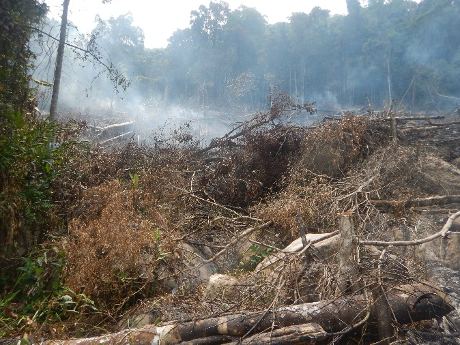 Cut trees still smoking from recent fire, in a protected area of Marojejy National Park.