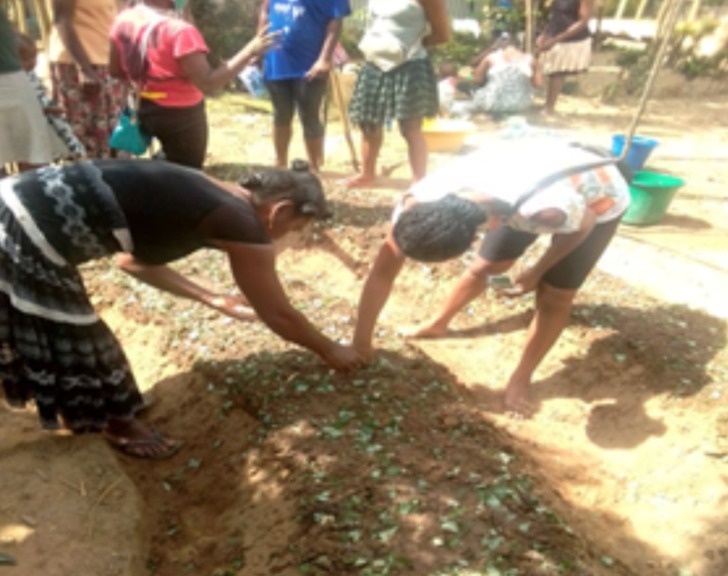 women planting beans at DLC-SAVA Workshop